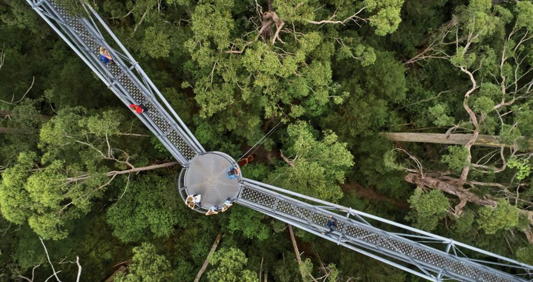 Valley of the Giants Tree Top Walk - Australia's South West