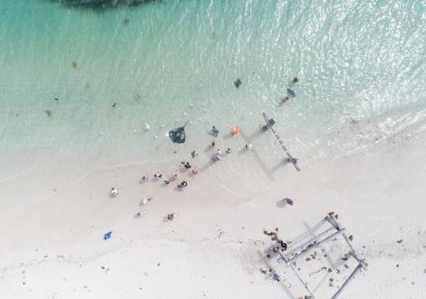 Drone shot of Hamelin Bay with stingray in water