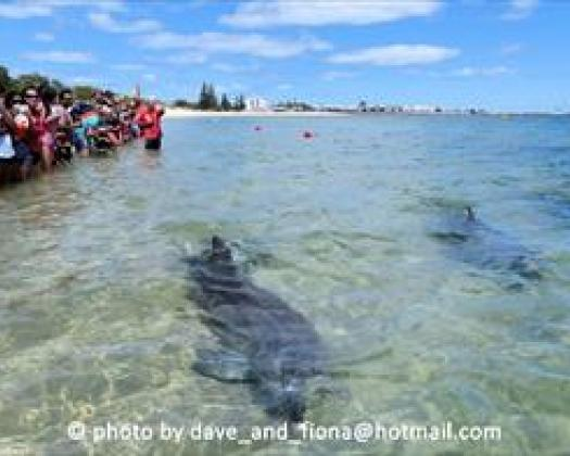 Bunbury Dolphin Discovery Centre | Australias South West