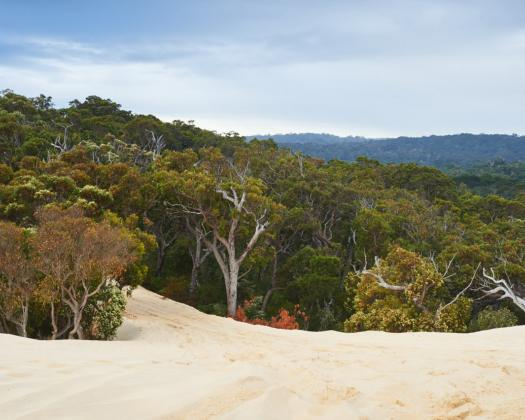 Impressive sand dune with forest view