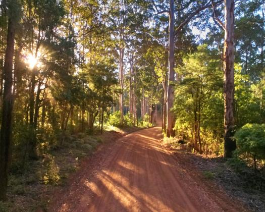 Dusty gravel road surrounded by beautiful trees