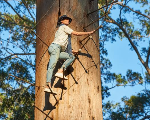 A woman climbs the Gloucester tree in Pemberton