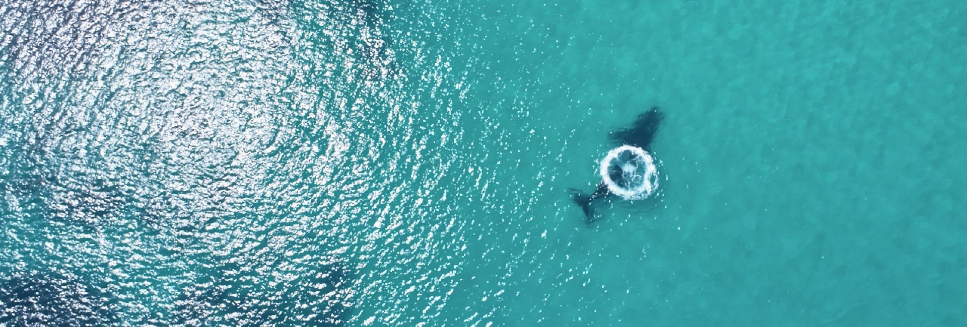 Whale watching, Dunsborough, Australia's South West