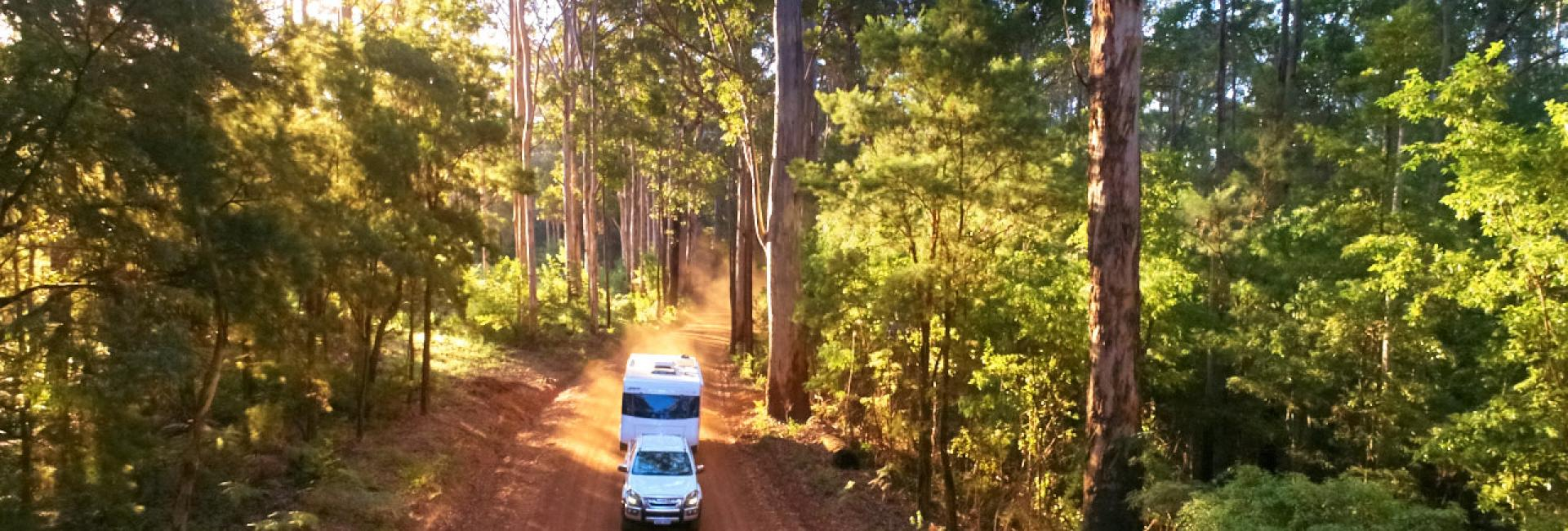 A car with a campervan drives on a dirt road in a green forest