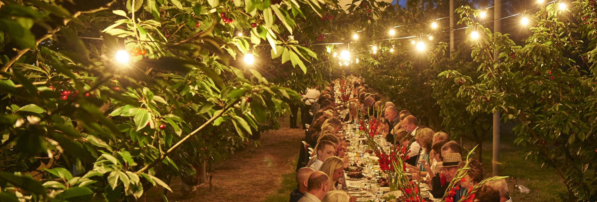 long table dinner outdoors with festoon lights