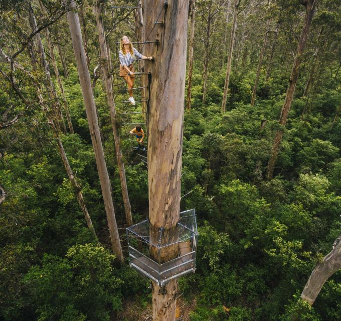 A girl climbs the Dave Evans Bicentennial tree on rungs in Pemberton