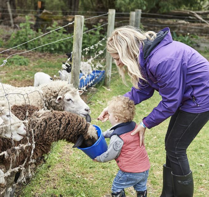 a child and mother feed sheep at a farm gate